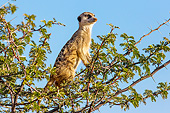 AFW 12 KH0032 01