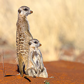 AFW 12 KH0035 01