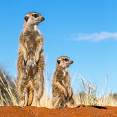 AFW 12 KH0038 01