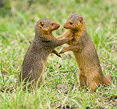 AFW 12 MC0002 01