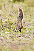 AFW 12 MC0003 01