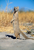 AFW 12 MH0003 01