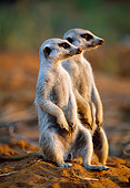 AFW 12 MH0006 01