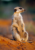 AFW 12 MH0010 01