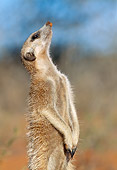 AFW 12 MH0012 01