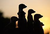 AFW 12 MH0017 01