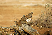 AFW 12 TL0001 01