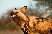AFW 14 JZ0005 01