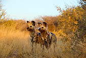 AFW 14 JZ0006 01