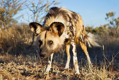 AFW 14 MH0007 01