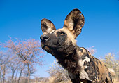 AFW 14 MH0010 01