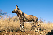AFW 14 MH0011 01