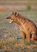 AFW 14 MH0018 01