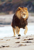 AFW 17 RK0028 25