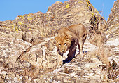 AFW 17 RK0113 03