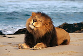 AFW 17 RK0011 05