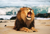AFW 17 RK0012 05