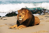 AFW 17 RK0020 04