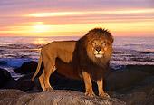 AFW 17 RK0060 10