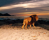 AFW 17 RK0083 01