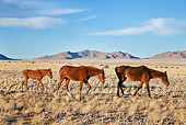 AFW 19 MH0001 01