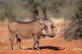 AFW 22 KH0001 01