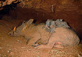 AFW 22 MH0002 01