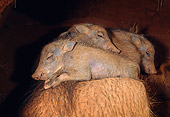 AFW 22 MH0004 01