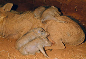AFW 22 MH0005 01
