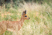 AFW 24 HP0002 01