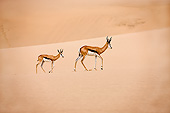 AFW 25 GL0002 01