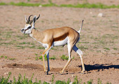 AFW 25 HP0001 01