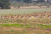 AFW 25 HP0002 01
