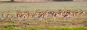 AFW 25 HP0003 01