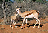AFW 25 MH0005 01