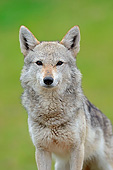 AFW 26 AC0002 01