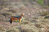 AFW 26 HP0002 01