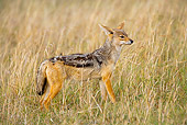AFW 26 JZ0001 01