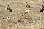 AFW 26 MC0002 01
