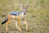 AFW 26 MC0003 01