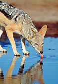 AFW 26 MH0001 01