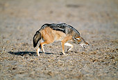 AFW 26 MH0003 01