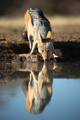 AFW 26 MH0007 01