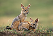 AFW 26 RW0001 01