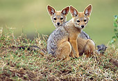 AFW 26 RW0002 01