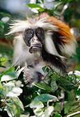 AFW 28 MC0001 01