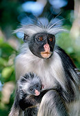 AFW 28 MH0004 01