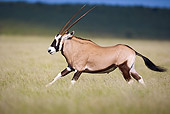 AFW 29 HP0005 01