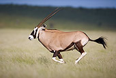 AFW 29 HP0006 01