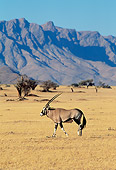AFW 29 MH0003 01